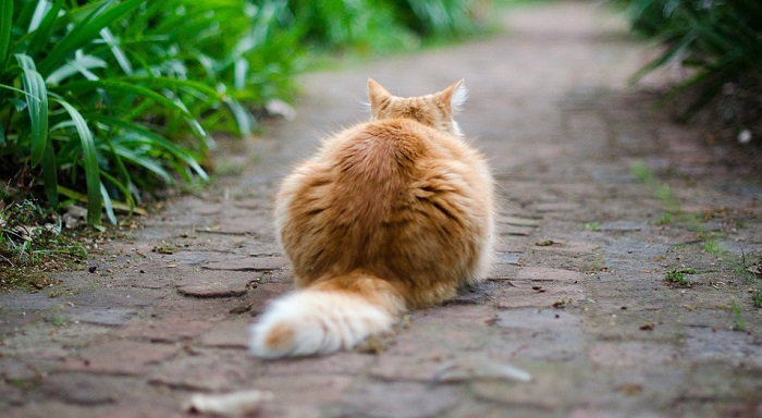Why Do Cats Have and Wag Their Tails