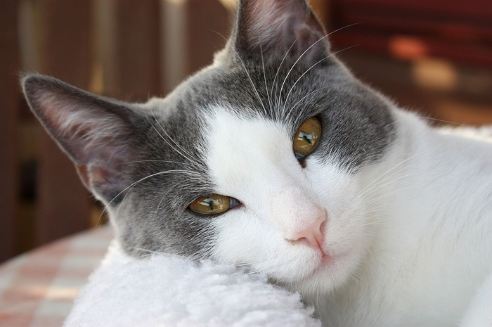 Why Cats Rub Against Humans